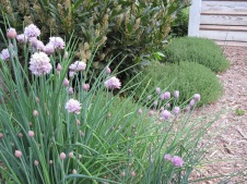 Chives, laurel and thyme
